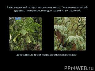 Разновидностей папоротников очень много. Они включают в себя деревья, лианы и мн