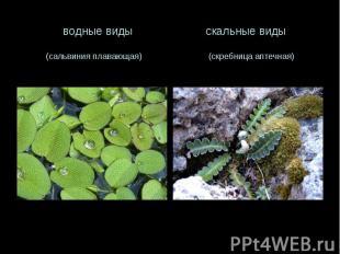 водные виды скальные виды (сальвиния плавающая) (скребница аптечная)