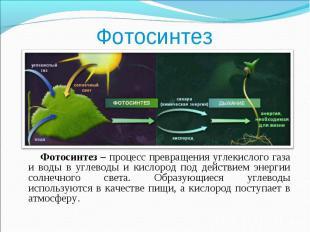 Фотосинтез – процесс превращения углекислого газа и воды в углеводы и кислород п