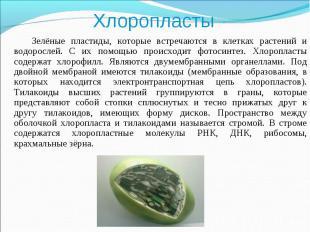 Зелёные пластиды, которые встречаются в клетках растений и водорослей. С их помо