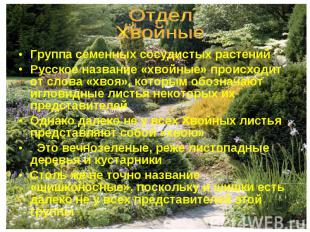 Группа семенных сосудистых растений Группа семенных сосудистых растений Русское