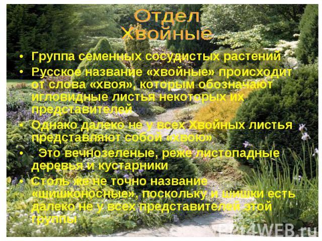 Группа семенных сосудистых растений Группа семенных сосудистых растений Русское название «хвойные» происходит от слова «хвоя», которым обозначают игловидные листья некоторых их представителей Однако далеко не у всех Хвойных листья представляют собой…
