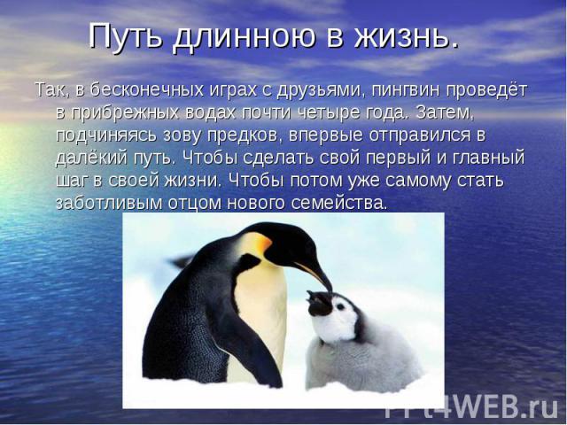 Путь длинною в жизнь. Так, в бесконечных играх с друзьями, пингвин проведёт в прибрежных водах почти четыре года. Затем, подчиняясь зову предков, впервые отправился в далёкий путь. Чтобы сделать свой первый и главный шаг в своей жизни. Чтобы потом у…
