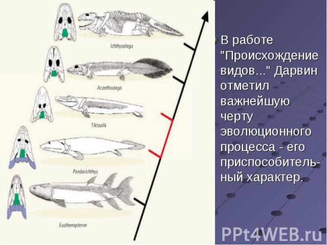 """В работе """"Происхождение видов..."""" Дарвин отметил важнейшую черту эволюционного процесса - его приспособитель-ный характер. В работе """"Происхождение видов..."""" Дарвин отметил важнейшую черту эволюционного процесса - его приспособите…"""