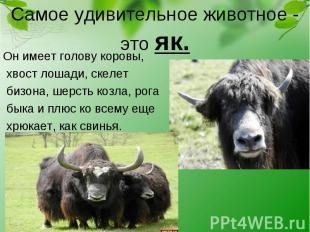 Он имеет голову коровы, Он имеет голову коровы, хвост лошади, скелет бизона, шер