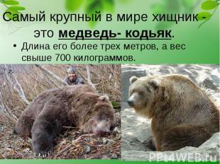 Длина его более трех метров, а вес свыше 700 килограммов. Длина его более трех м