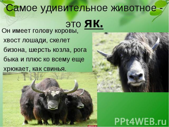 Он имеет голову коровы, Он имеет голову коровы, хвост лошади, скелет бизона, шерсть козла, рога быка и плюс ко всему еще хрюкает, как свинья.