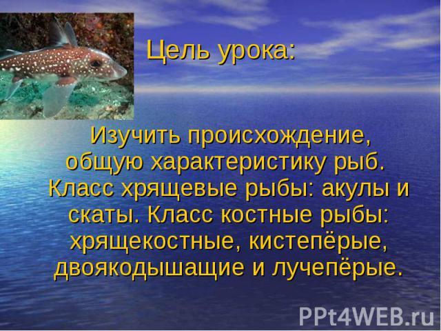 Изучить происхождение, общую характеристику рыб. Класс хрящевые рыбы: акулы и скаты. Класс костные рыбы: хрящекостные, кистепёрые, двоякодышащие и лучепёрые.