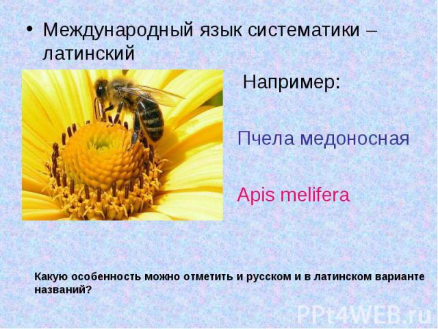 Международный язык систематики – латинский Международный язык систематики – латинский Например: Пчела медоносная Apis melifera