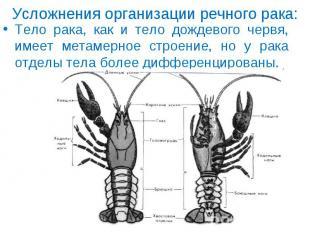 Тело рака, как и тело дождевого червя, имеет метамерное строение, но у рака отде