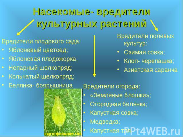 Насекомые- вредители культурных растений Вредители огорода: «Земляные блошки»; Огородная белянка; Капустная совка; Медведка; Капустная тля
