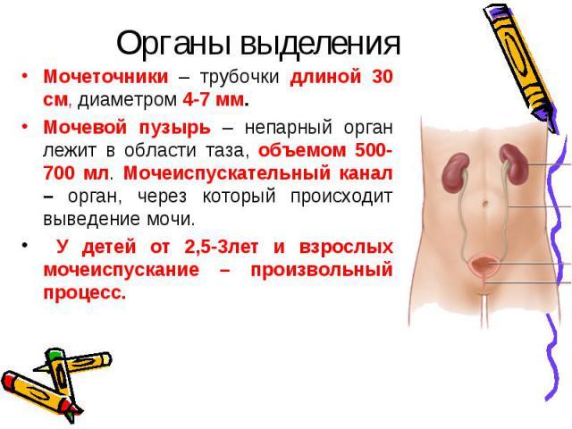 Мочеточники – трубочки длиной 30 см, диаметром 4-7 мм. Мочеточники – трубочки длиной 30 см, диаметром 4-7 мм. Мочевой пузырь – непарный орган лежит в области таза, объемом 500-700 мл. Мочеиспускательный канал – орган, через который происходит выведе…