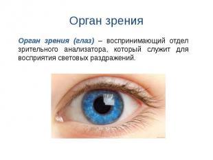 Орган зрения Орган зрения (глаз) – воспринимающий отдел зрительного анализатора,