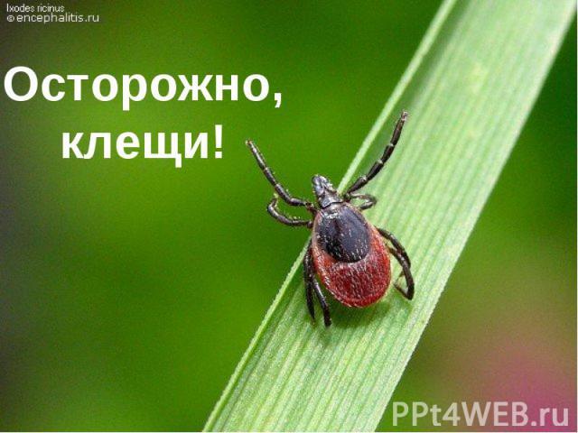 Осторожно, клещи!
