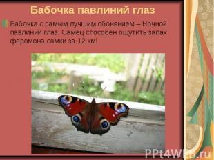 Бабочка павлиний глаз Бабочка с самым лучшим обонянием – Ночной павлиний глаз. С