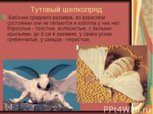 Тутовый шелкопряд Бабочки среднего размера, во взрослом состоянии они не п