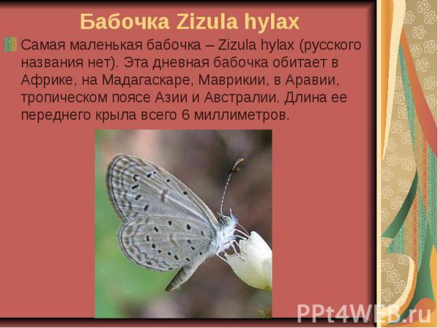 Бабочка Zizula hylax Самая маленькая бабочка – Zizula hylax (русского названия нет). Эта дневная бабочка обитает в Африке, на Мадагаскаре, Маврикии, в Аравии, тропическом поясе Азии и Австралии. Длина ее переднего крыла всего 6 миллиметров.