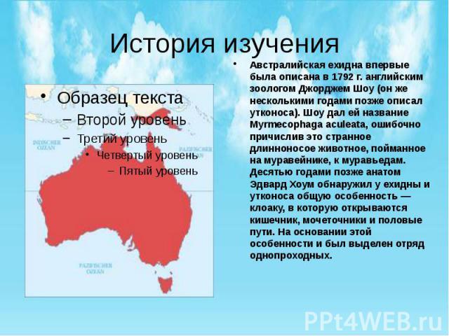 История изучения Австралийская ехидна впервые была описана в 1792 г. английским зоологом Джорджем Шоу (он же несколькими годами позже описал утконоса). Шоу дал ей название Myrmecophaga aculeata, ошибочно причислив это странное длинноносое животное, …