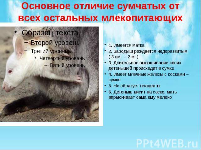 Основное отличие сумчатых от всех остальных млекопитающих 1. Имеется матка 2. Зародыш рождается недоразвитым ( 3 см . – 2 м. ) 3. Длительное вынашивание своих детенышей происходит в сумке 4. Имеет млечные железы с сосками – сумке 5. Не образует плац…