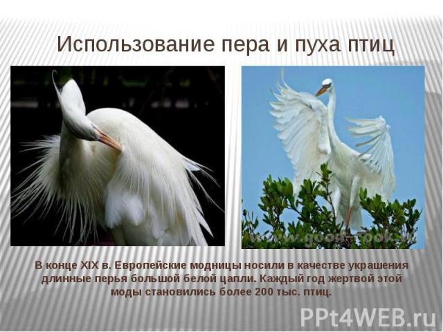 Использование пера и пуха птиц