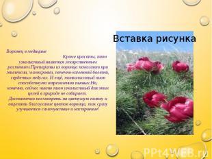 Воронец в медицине Кроме красоты, пион узколистный является лекарственным растен