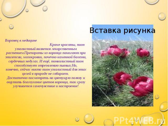 Воронец в медицине Кроме красоты, пион узколистный является лекарственным растением.Препараты из воронца помогают при эпилепсии, малокровии, почечно-каменной болезни, сердечных недугах. И ещё, тонколистный пион способствует отрезвлению пьяных.Но, ко…