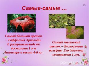 Самые-самые … Самый большой цветок – Раффлезия Арнольди. В раскрытом виде он дос