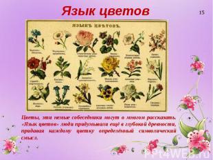 Язык цветов Цветы, эти немые собеседники могут о многом рассказать. «Язык цветов