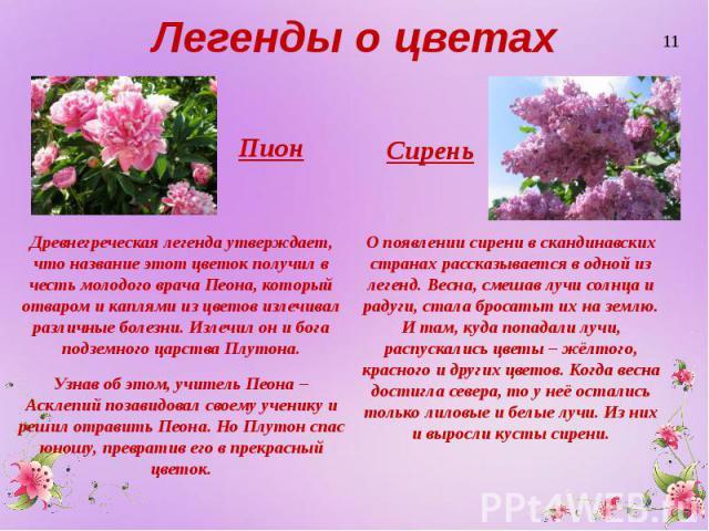 Легенды о цветах Пион