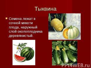 Семена лежат в сочной мякоти плода, наружный слой околоплодника деревянистый. Се