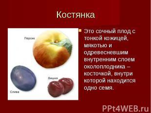 Это сочный плод с тонкой кожицей, мякотью и одревесневшим внутренним слоем около