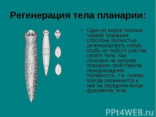 Один из видов плоских червей планария способна полностью регенерировать новую ос