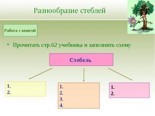 Разнообразие стеблей Прочитать стр.62 учебника и заполнить схему
