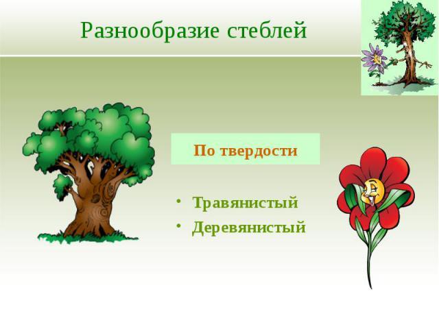 Разнообразие стеблей Травянистый Деревянистый