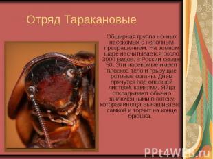 Отряд Таракановые Обширная группа ночных насекомых с неполным превращением. На з