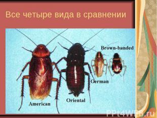 Все четыре вида в сравнении