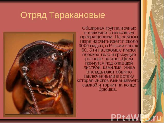 Отряд Таракановые Обширная группа ночных насекомых с неполным превращением. На земном шаре насчитывается около 3000 видов, в России свыше 50. Эти насекомые имеют плоское тело и грызущие ротовые органы. Днем прячутся под опавшей листвой, камнями. Яйц…