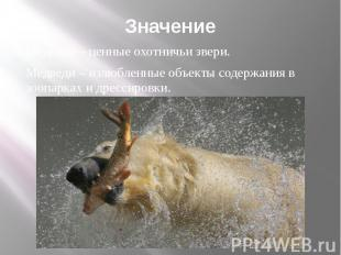 Значение Медведи – ценные охотничьи звери. Медведи – излюбленные объекты содержа