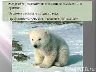 Медвежата рождаются маленькими, весом около 700 граммов. Медвежата рождаются мал