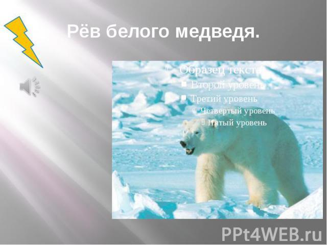 Рёв белого медведя.