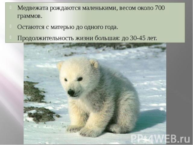 Медвежата рождаются маленькими, весом около 700 граммов. Медвежата рождаются маленькими, весом около 700 граммов. Остаются с матерью до одного года. Продолжительность жизни большая: до 30-45 лет.