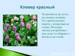 Встречается на лугах, на лесных полянах. Его цветки можно видеть с конца мая до
