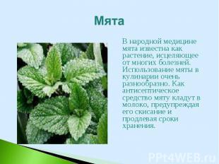 В народной медицине мята известна как растение, исцеляющее от многих болезней. И