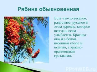 Есть что-то весёлое, радостное, русское в этом деревце, которое всегда и всем ул