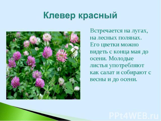 Встречается на лугах, на лесных полянах. Его цветки можно видеть с конца мая до осени. Молодые листья употребляют как салат и собирают с весны и до осени. Встречается на лугах, на лесных полянах. Его цветки можно видеть с конца мая до осени. Молодые…