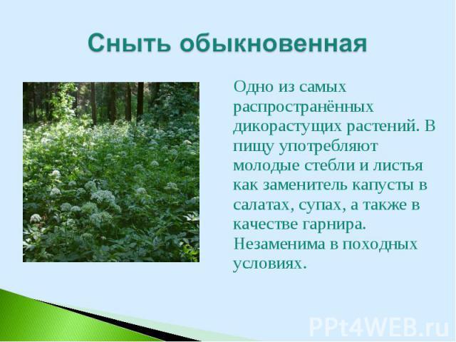 Одно из самых распространённых дикорастущих растений. В пищу употребляют молодые стебли и листья как заменитель капусты в салатах, супах, а также в качестве гарнира. Незаменима в походных условиях. Одно из самых распространённых дикорастущих растени…