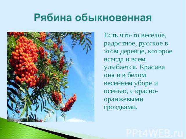 Есть что-то весёлое, радостное, русское в этом деревце, которое всегда и всем улыбается. Красива она и в белом весеннем уборе и осенью, с красно-оранжевыми гроздьями. Есть что-то весёлое, радостное, русское в этом деревце, которое всегда и всем улыб…