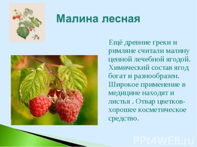 Ещё древние греки и римляне считали малину ценной лечебной ягодой. Химический состав ягод богат и разнообразен. Широкое применение в медицине находят и листья . Отвар цветков- хорошее косметическое средство. Ещё древние греки и римляне считали малин…