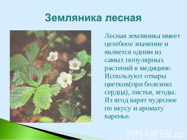 Лесная земляника имеет целебное значение и является одним из самых популярных растений в медицине. Используют отвары цветков(при болезнях сердца), листья, ягоды. Из ягод варят чудесное по вкусу и аромату варенье. Лесная земляника имеет целебное знач…