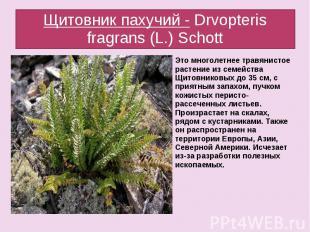 Щитовник пахучий - Drvopteris fragrans (L.) Schott Это многолетнее травянистое р